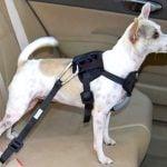 Cinto de segurança para cachorro: Legislação, preço e como usar?
