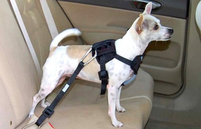 como usar o cinto de segurança para cachorro
